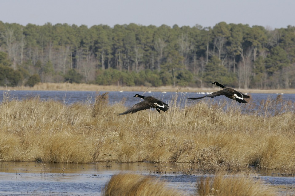Ducks Unlimited Canada and Partners Preserve Important Coastal Wetland Habitat Near Cornwall