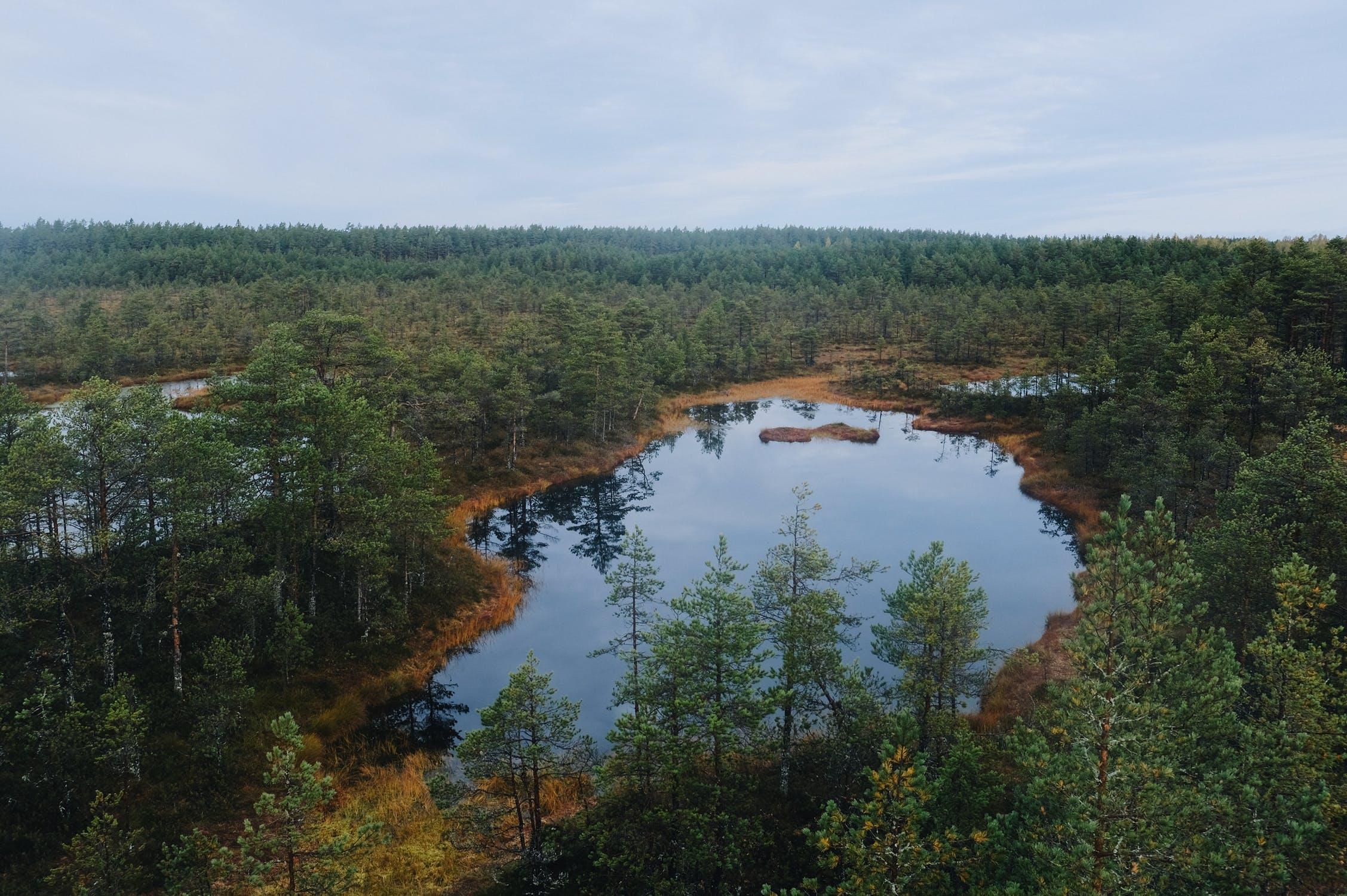 Otty Lake Fish Habitat Improvement Project