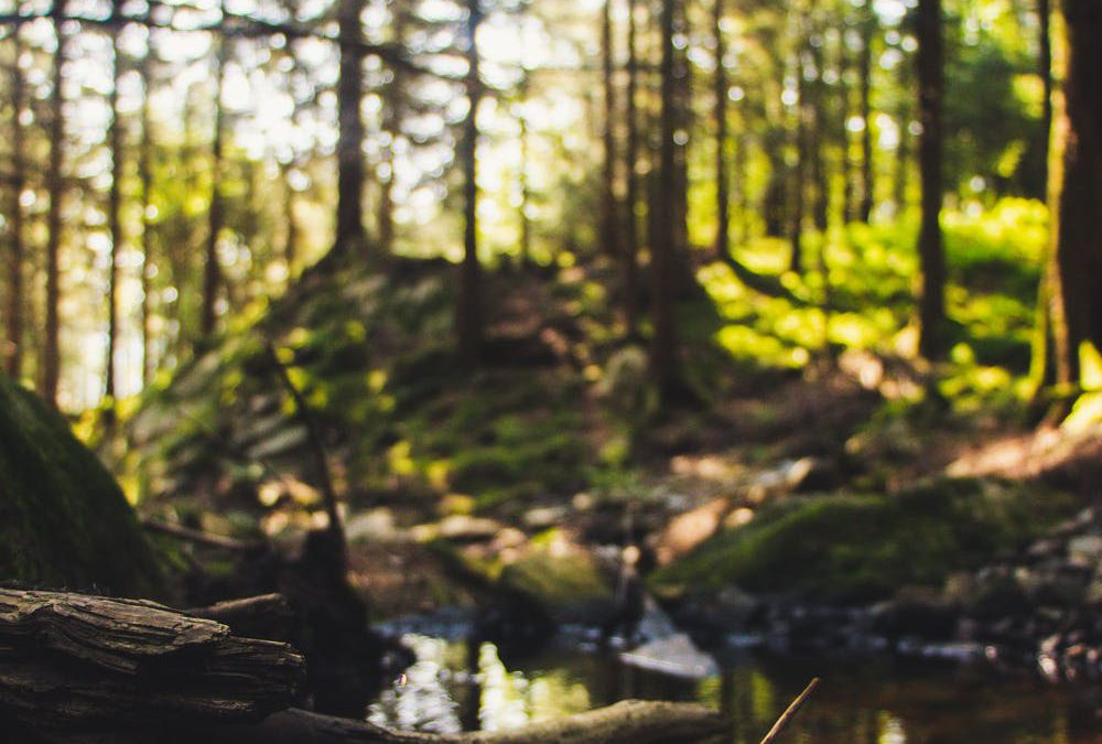 Fraser River Estuary Habitat Restoration