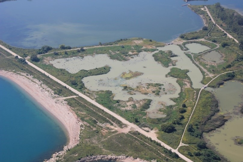 Constructed Wetland at Tommy Thompson Park Cell 2