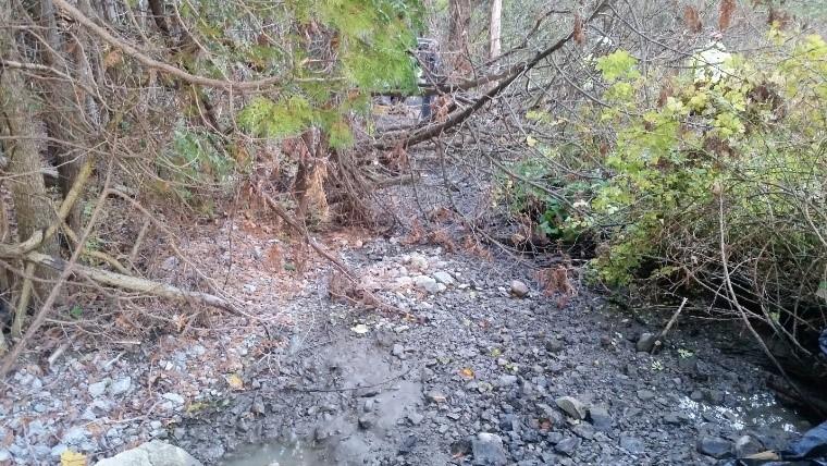 La restauration du ruisseau Brougham