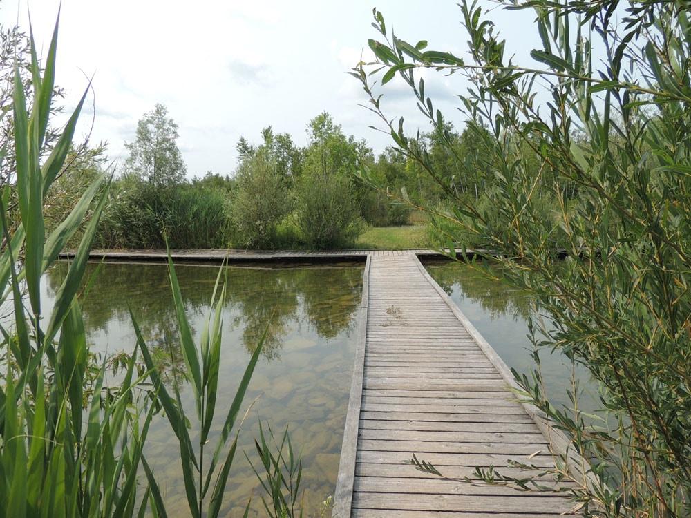 Fletcher Creek Ecological Preserve