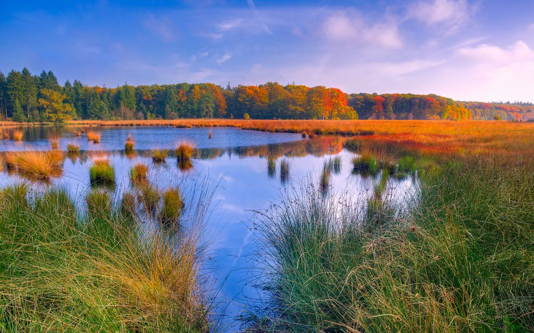 Point Pelee Marsh Restoration