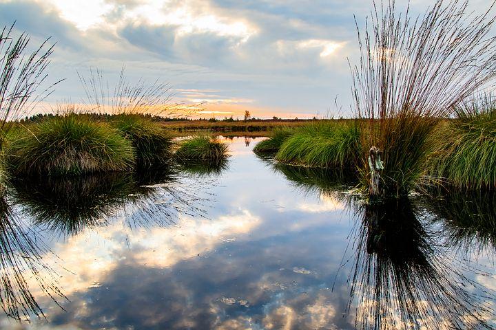 Wetland Conservation on Sainte-Thérèse Island